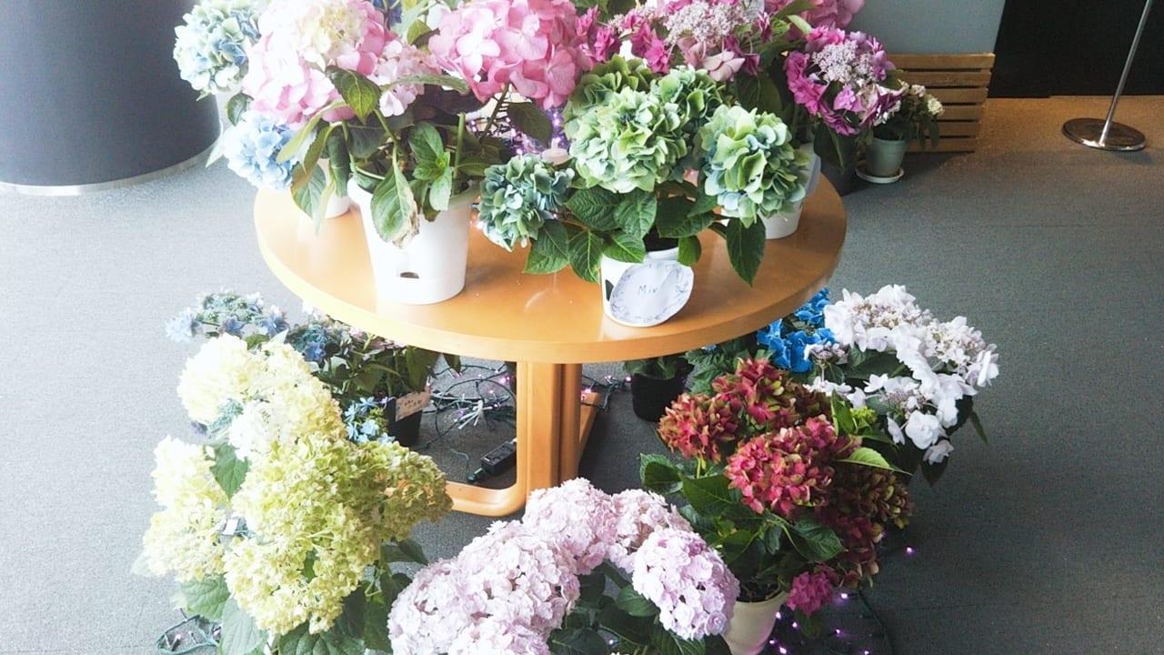 【下関市】6月といえば紫陽花!海峡ゆめタワー展望室あじさいまつりを覗いてきました☆彡