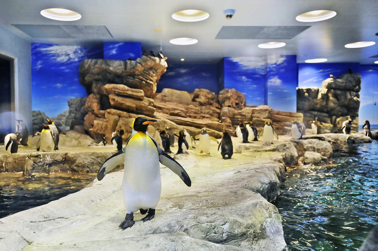 村 ペンギン