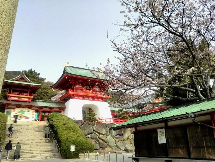 赤間神宮と桜